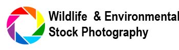 Wildlife & Environmental Stock Photos Directory