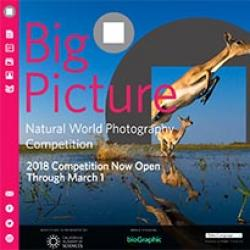 2018 BigPicture Natural World Photography Competition